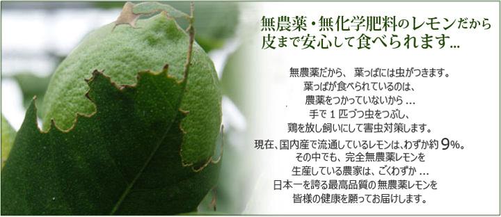完全無農薬・無化学肥料のレモンだから皮まで安心して食べられます。