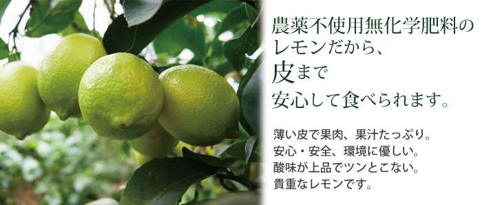 農薬不使用・無化学肥料のレモンだから皮まで安心して食べられます。
